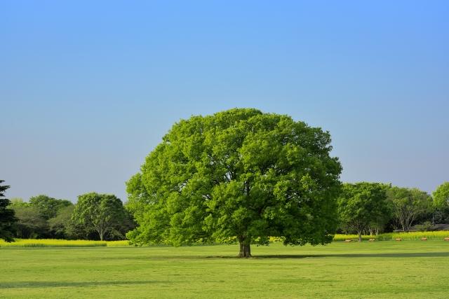 名古屋骨盤矯正の木